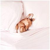 Qui a un peu trop profité ce week-end et a perdu l'habitude ? 😴  . . #heymamagang #wednesday #mercredi #cutepuppy #chien #chienendormi #sleepydog #kidsday